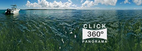 coeira1_500×180.jpg